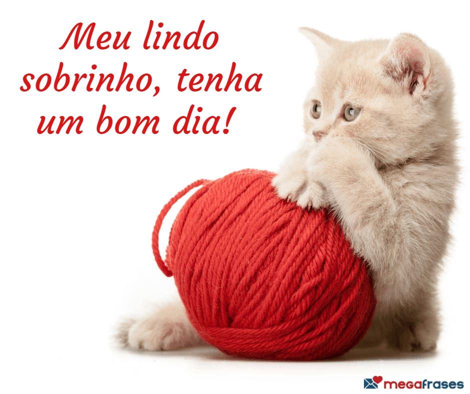 megafrases-bom-dia-para-sobrinho-facebook