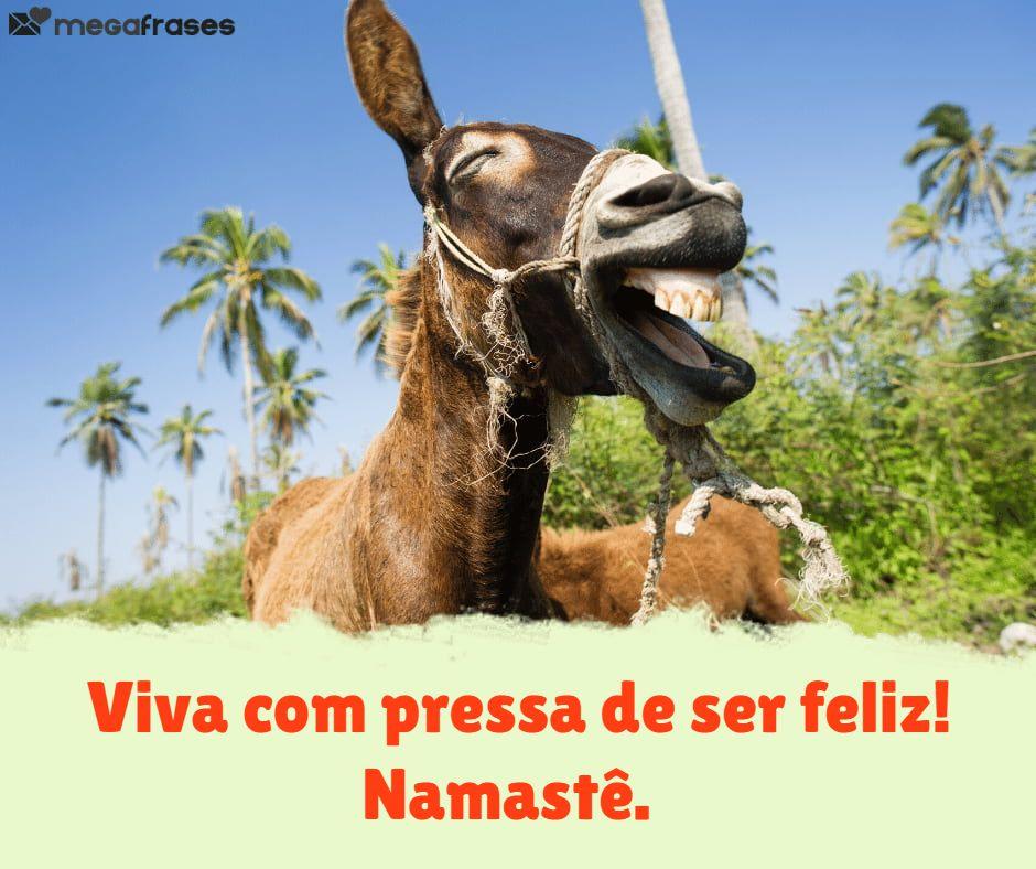 megafrases-mensagens-namaste-para-boa-tarde-especial
