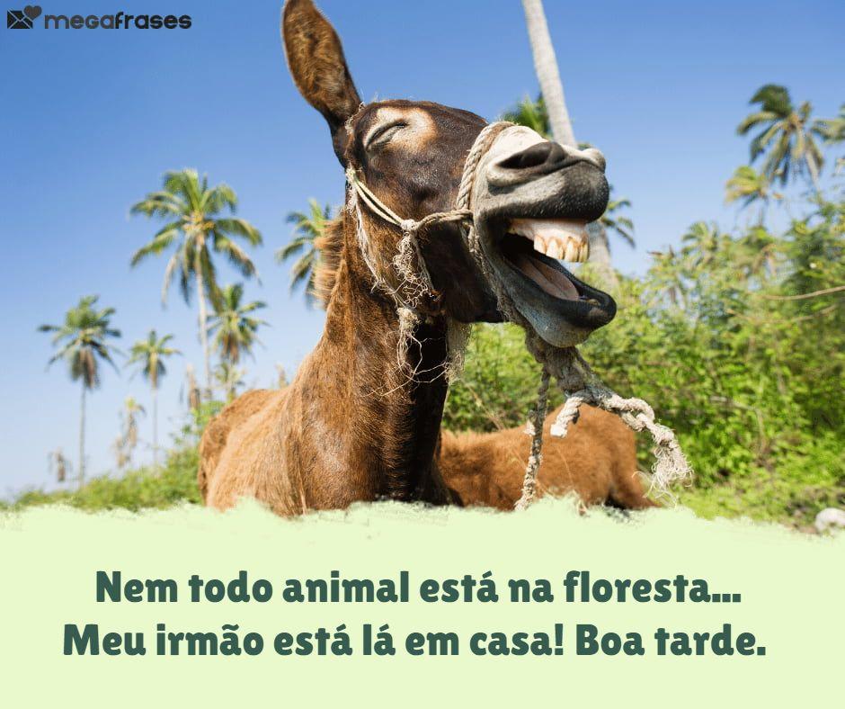 megafrases-boa-tarde-irmao-para-whatsapp
