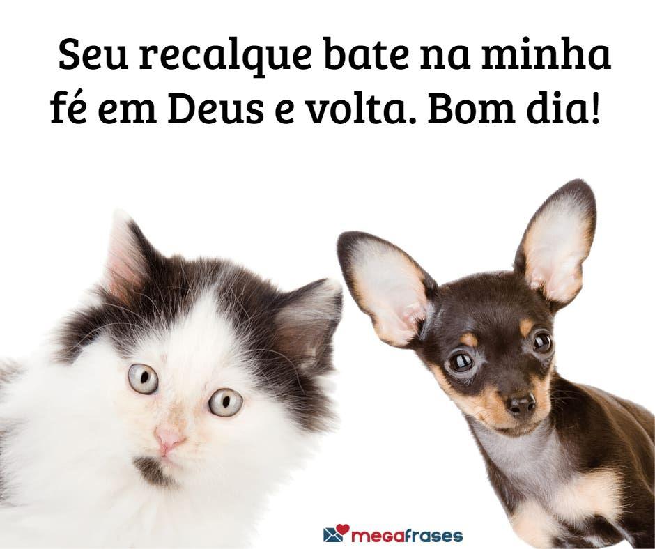 megafrases-frase-de-bom-dia-evangelica-para-compartilhar-bencao-whatsapp