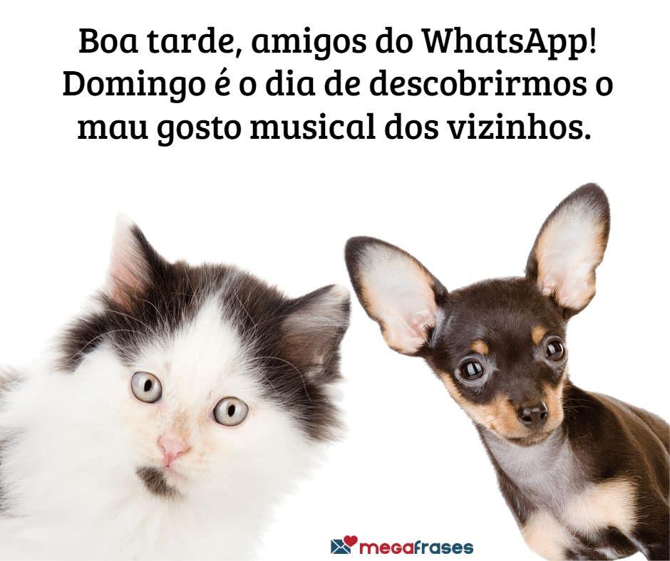 megafrases-mensagens-de-boa-tarde-muito-engracadas-no-whatsapp