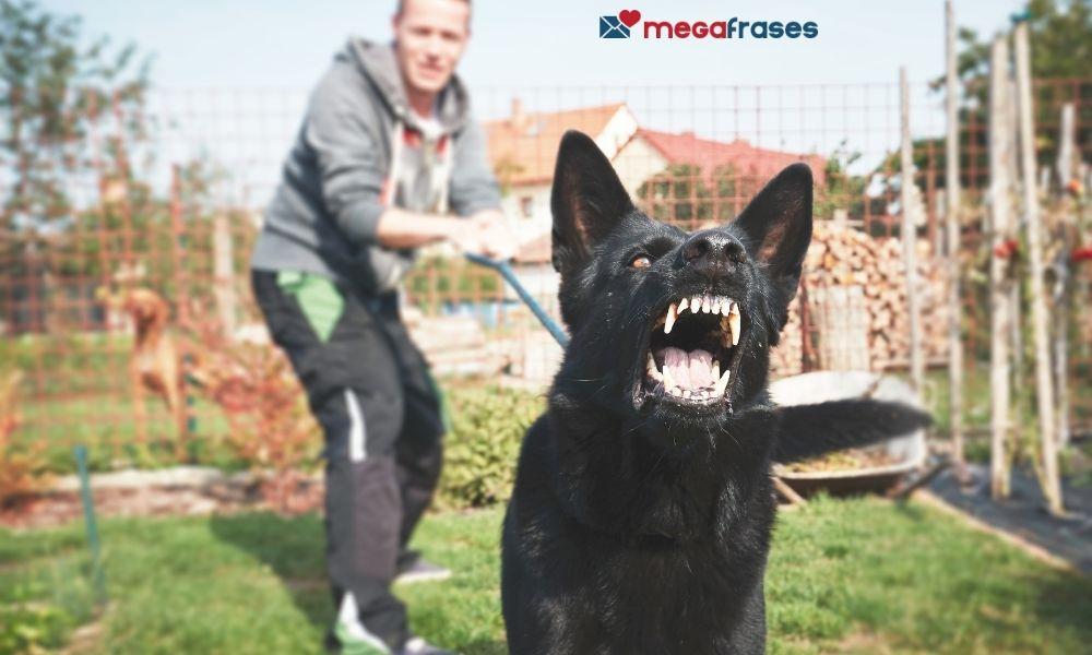 o-que-significa-sonhar-com-cachorro-atacando