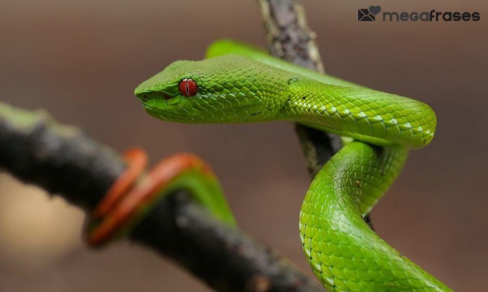sonhos-com-cobras