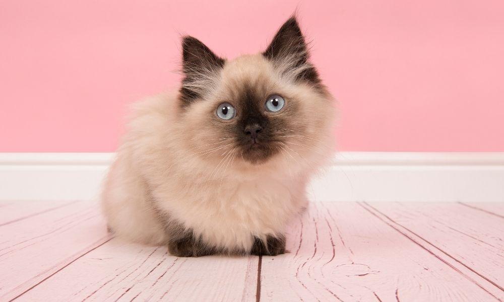 qual-o-significado-de-sonhar-com-gatos