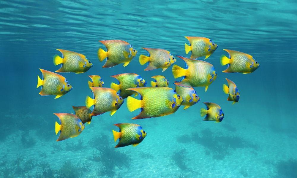 significado-de-sonhar-com-cardume-de-peixe