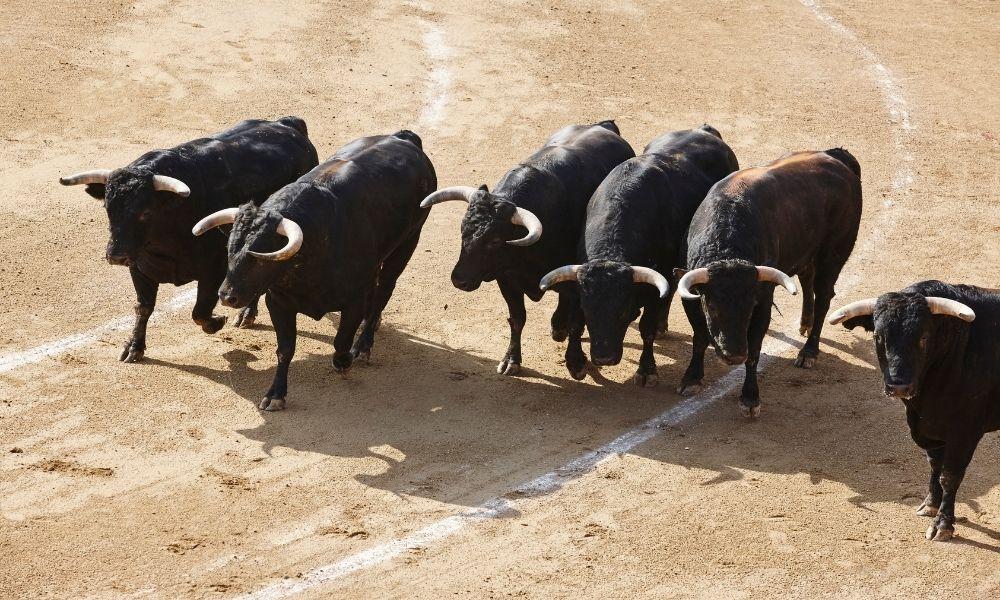 sonhar-com-muitos-touros-atacando