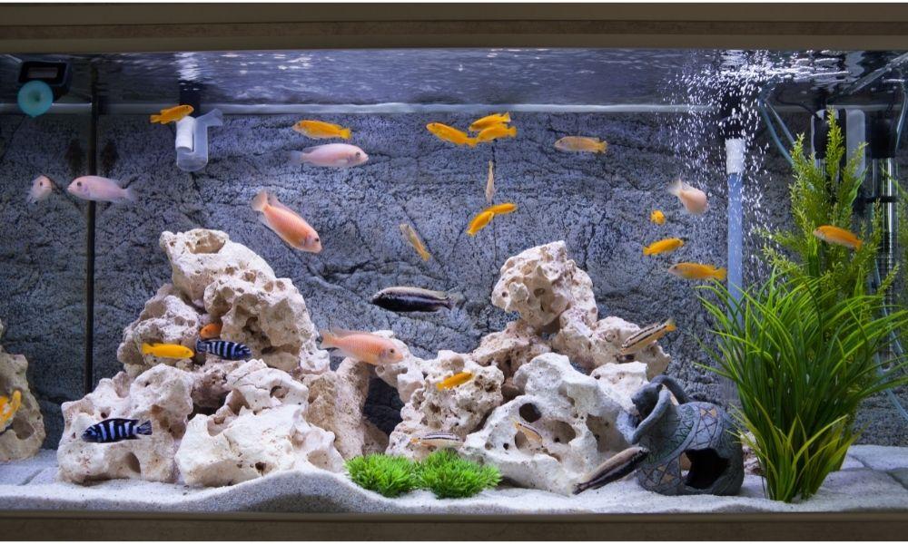 sonho-com-aquario-de-peixe